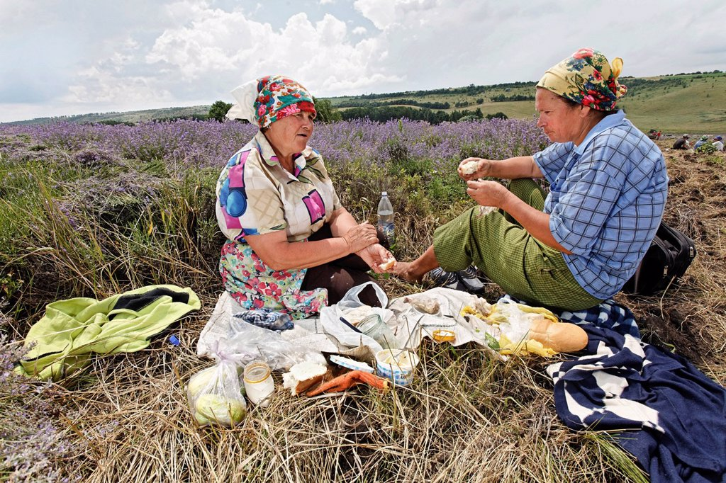 Stock Photo: 1848-612578 Two women taking a break during the harvest of organically cultivated lavender Lavandula, Moldova, Southeastern Europe