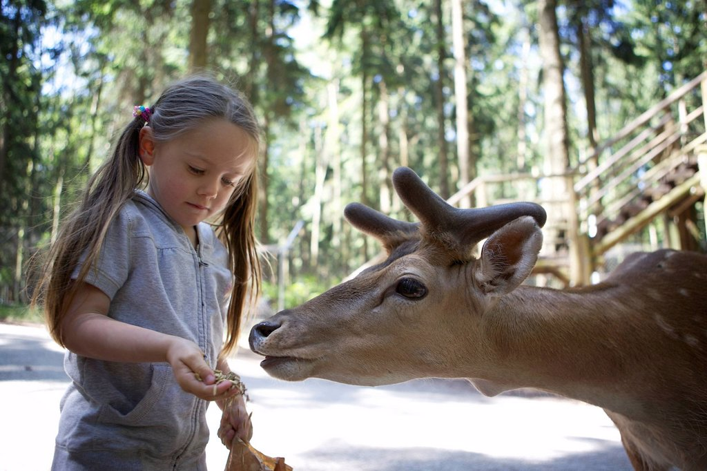 Stock Photo: 1848-613098 Three_year_old girl hand feeding a fallow deer in a forest, Wildpark Poing wildlife park, Bavaria, Germany, Europe