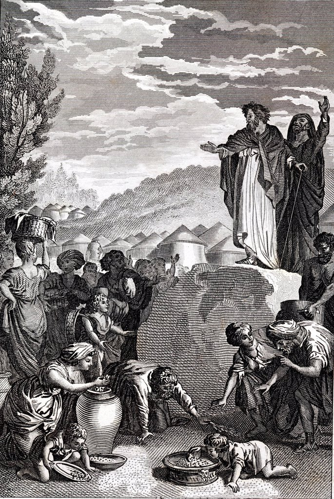 Stock Photo: 1848-613143 The Manna food in the desert, biblical scene, historical illustration, 1872