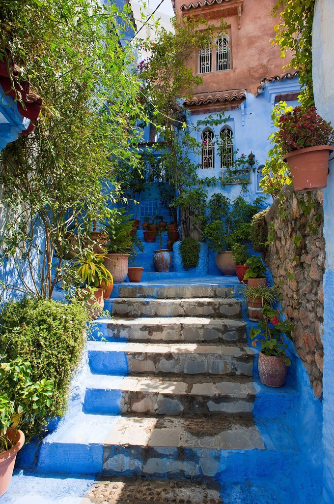Narrow, blue_painted alley with steps and plants in the Medina, old town of Chefchaouen, Morocco, Africa : Stock Photo
