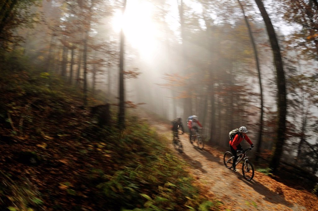 Stock Photo: 1848-614517 Mountainbikers descending from Gotzenalm alp through a forest shrouded in mist, Berchtesgadener Land district, Upper Bavaria, Bavaria, Germany, Europe