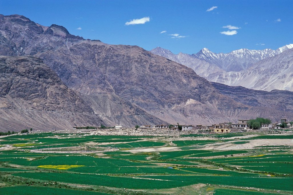 Fields and mountains, Nubra Valley, Ladakh, Indian Himalayas, Jammu and Kashmir, North India, India, Asia : Stock Photo