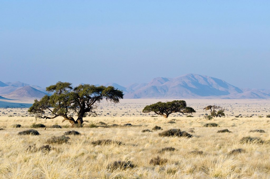 Stock Photo: 1848-617816 Landscape with thorntrees Acacia, Koiimasis farm, Tiras mountains, Namibia, Africa