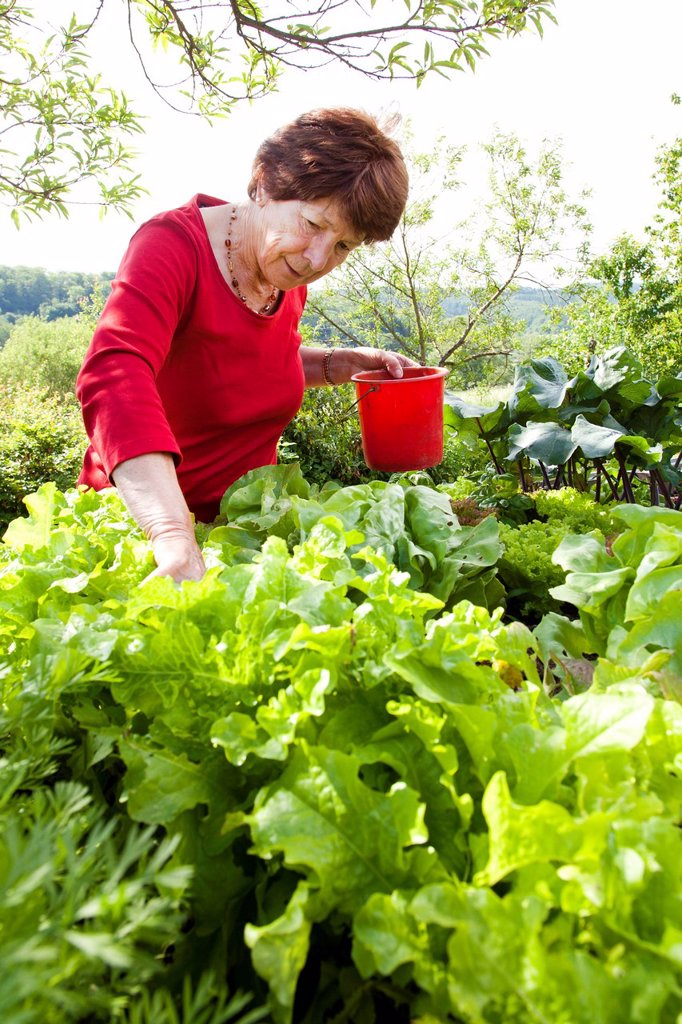 Stock Photo: 1848-617954 Elderly woman, retiree, 70_80 years old, working on a raised bed in a garden, Bengel, Rhineland_Palatinate, Germany, Europe