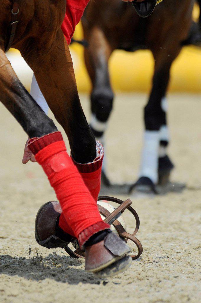 Stock Photo: 1848-623984 A horseball player is picking up the ball, Manga Racino, Lower Austria, Austria, Europe