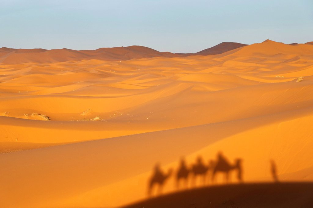 A caravan is casting a shadow on dunes, dromedary camels Camelus dromedarius, at the sand dunes of Erg Chebbi, Erfoud, Meknes_Tafilalet, Morocco, Maghreb, North Africa, Africa : Stock Photo