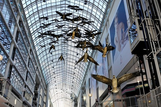 Stock Photo: 1848-62497 Canada geese flight stop under the glass roof of Toronto Eaton Centre, one of the largest shopping malls in North America, Toronto, Ontario, Canada, North America