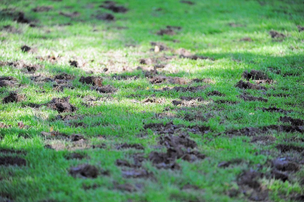A completely destroyed polo field : Stock Photo