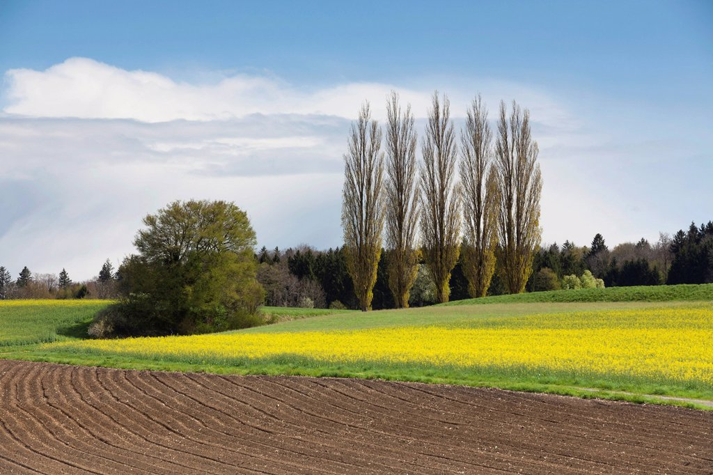Stock Photo: 1848-631414 Cultural landscape near Ermatingen on Lake Constance in spring, Switzerland, Europe, PublicGround