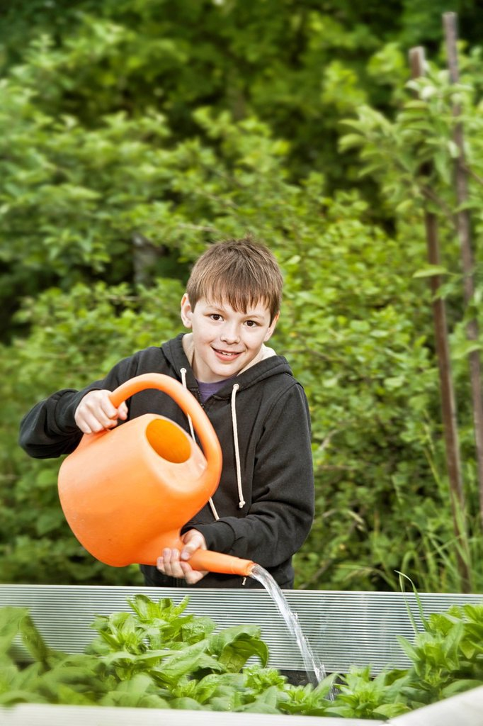 Stock Photo: 1848-647006 Boy with a watering can, elevated spinach bed
