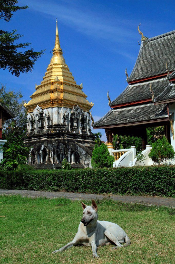 Stock Photo: 1848-648158 Temple dog in front of the Wat Chiang Man temple, Chiang Mai, Thailand, Asia