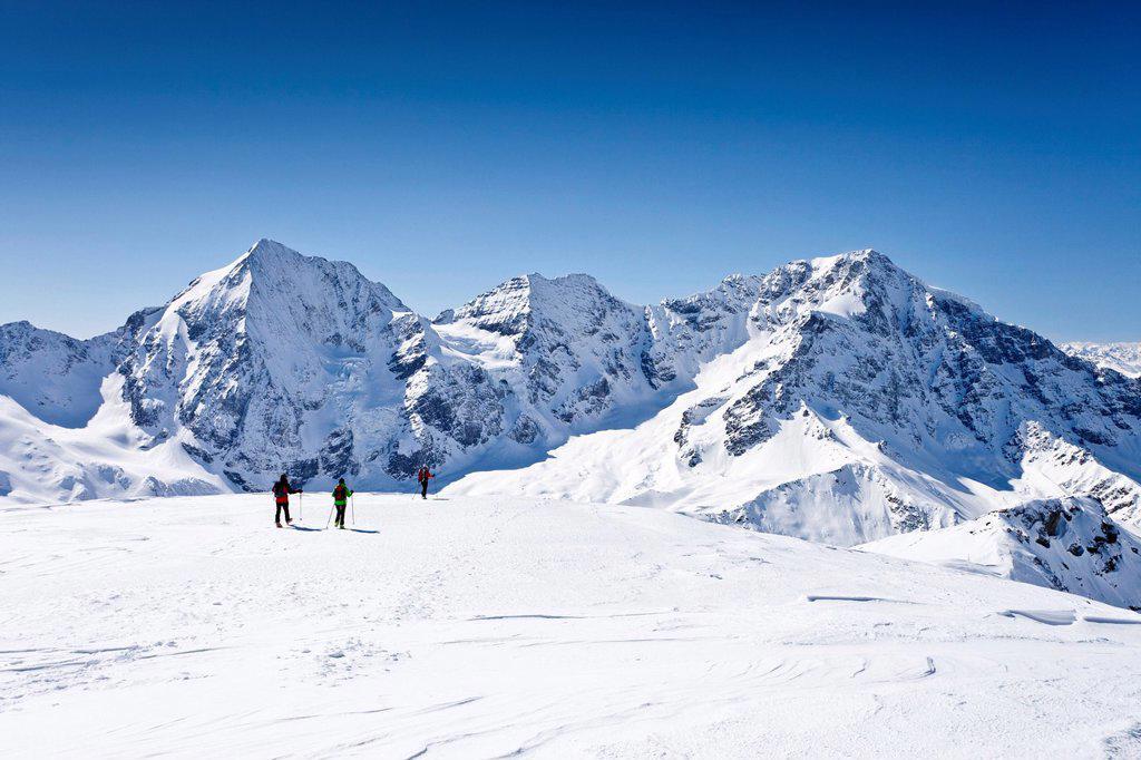 Stock Photo: 1848-648189 Cross_country skiers descending Hintere Schoentaufspitze Mountain, Solda in winter, looking towards Koenigsspitze, Zebru and Ortler mountains, Alto Adige, Italy, Europe