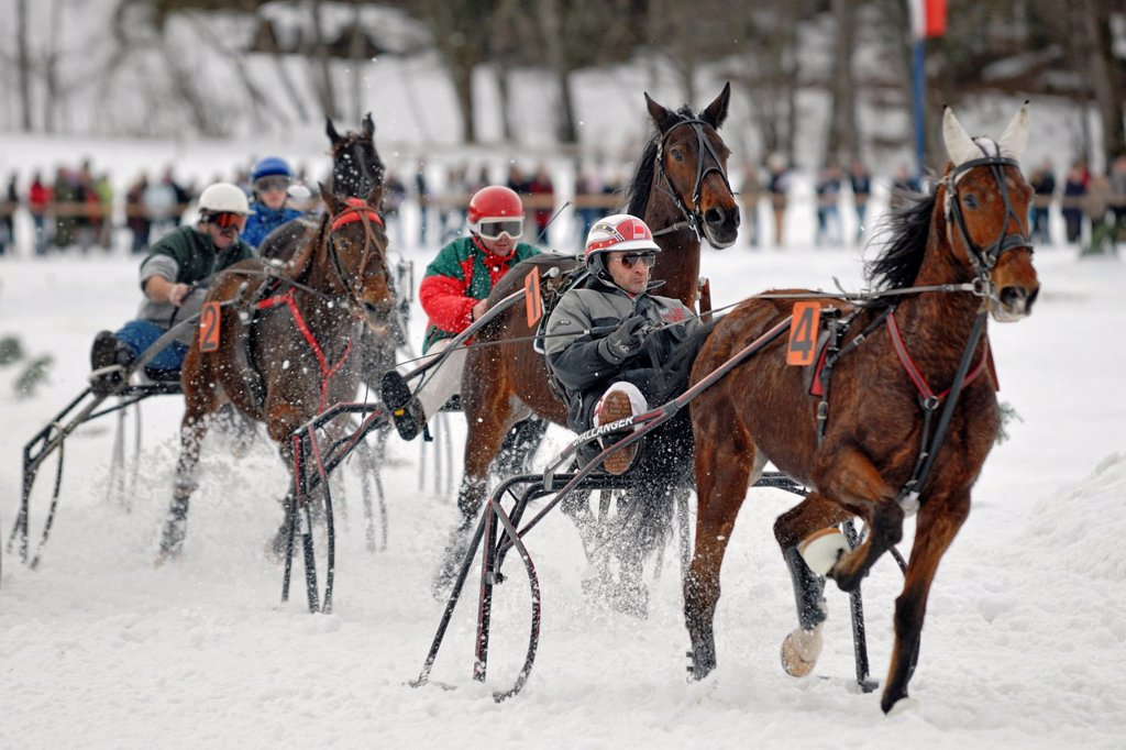 Traber show driving at the horse_sleigh race in Parsberg, Upper Bavaria, Bavaria, Germany, Europe : Stock Photo