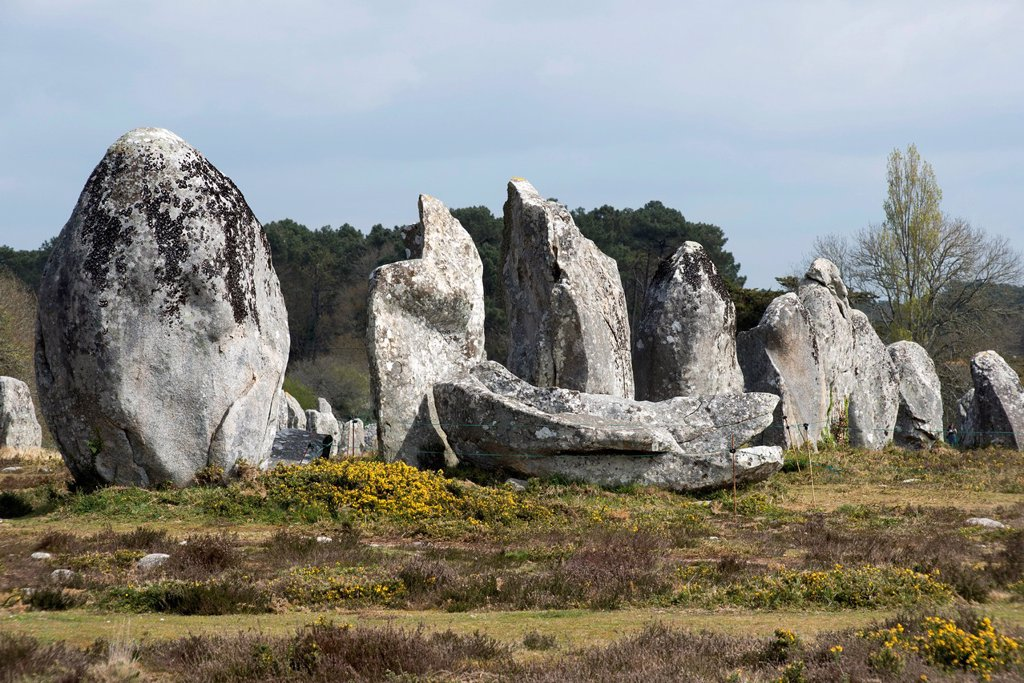Standing stones, menhirs, in a row, Carnac, Département Morbihan, Brittany, France, Europe : Stock Photo