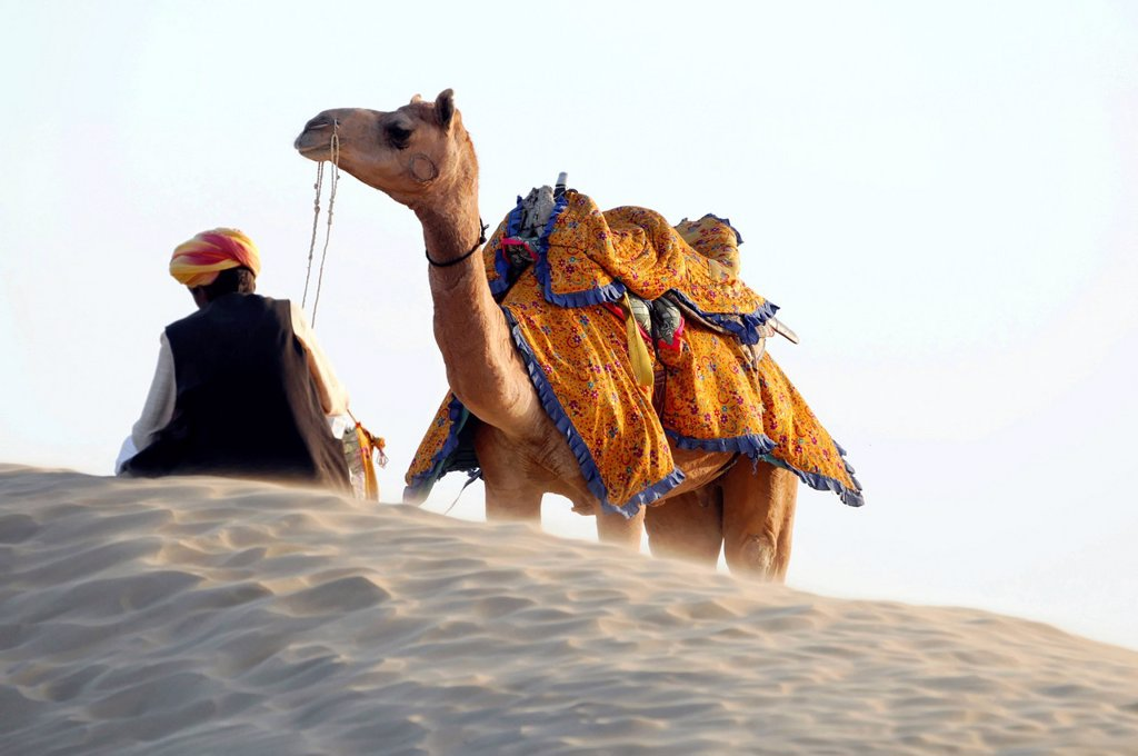 Indian man wearing a traditional dhoti and a turban, with his dromedary camel in the Thar desert, Rajasthan, India, Asia : Stock Photo
