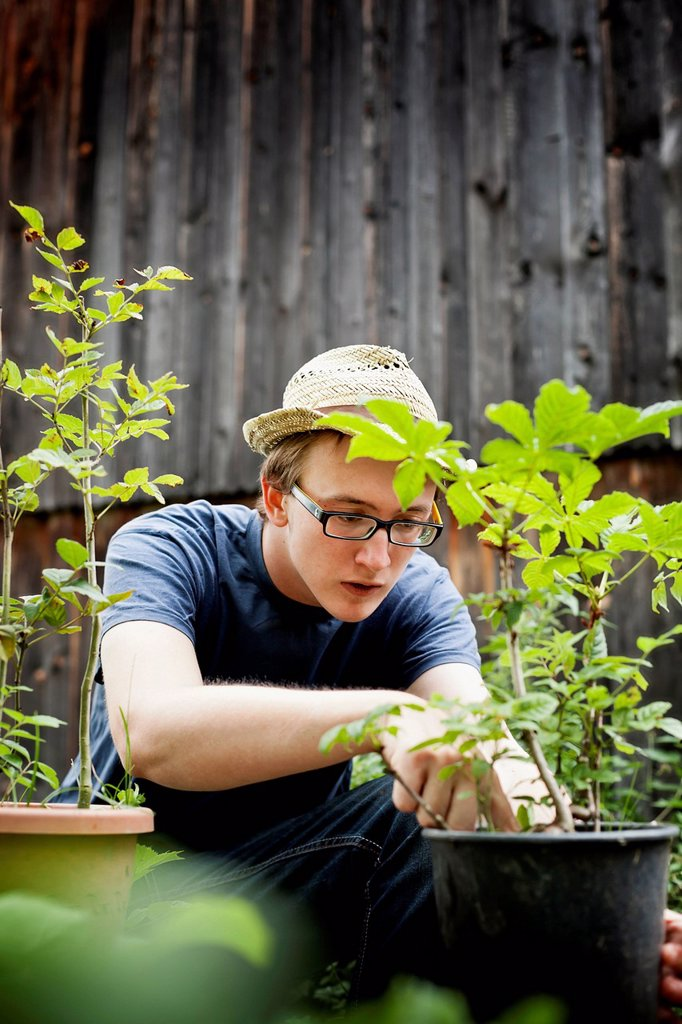 Young man with trees in pots : Stock Photo