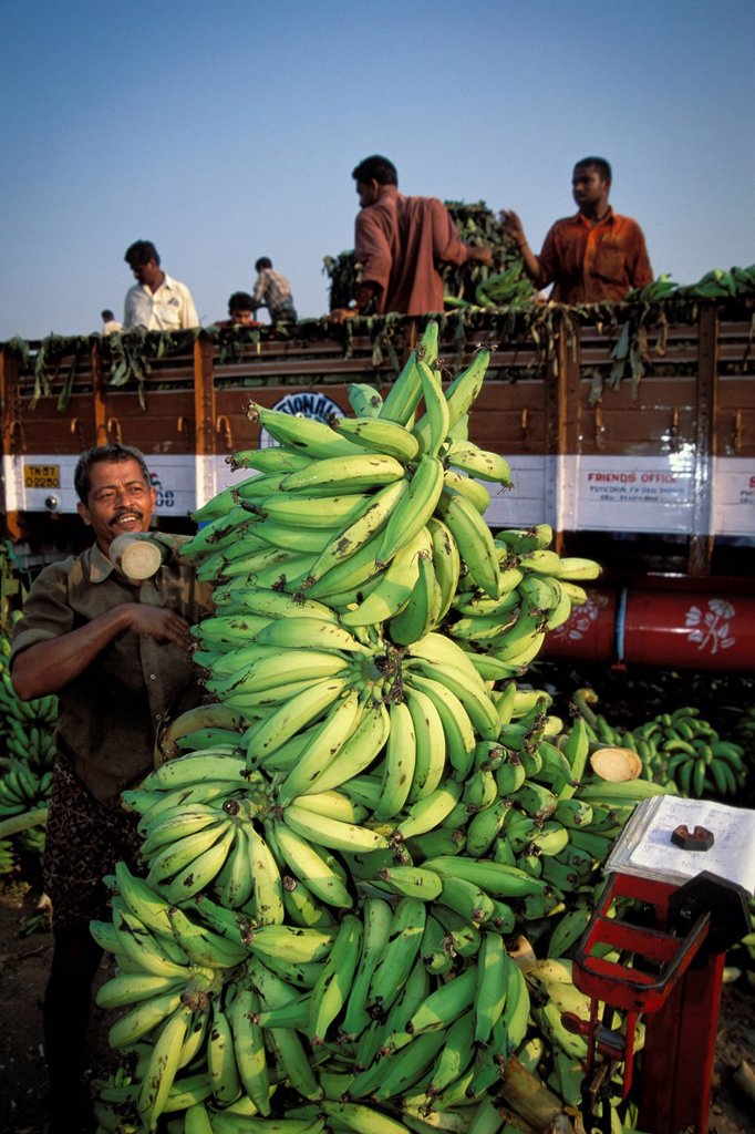 Stock Photo: 1848-655359 Bananas are weighed, banana market, Thrissur, Kerala, South India, India, Asia