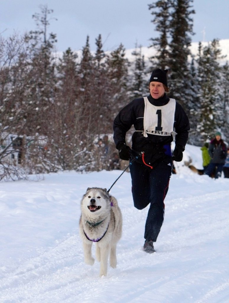 Stock Photo: 1848-656725 Sled dog, Siberian Husky, pulling a running man, canicross, dog sport, sled dog race near Whitehorse, Yukon Territory, Canada