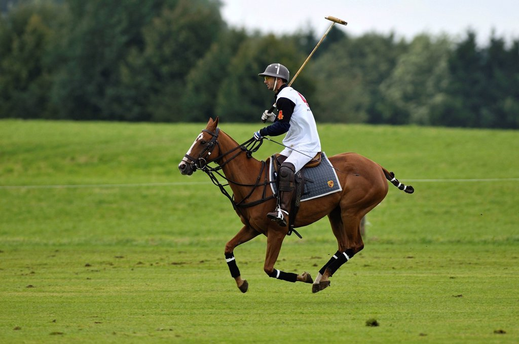 Cristobal Durrieu, Porsche Olympiapark team, riding his galloping polo horse, Bucherer Trophy 2010, polo tournament, Thann, Holzkirchen, Upper Bavaria, Bavaria, Germany, Europe : Stock Photo