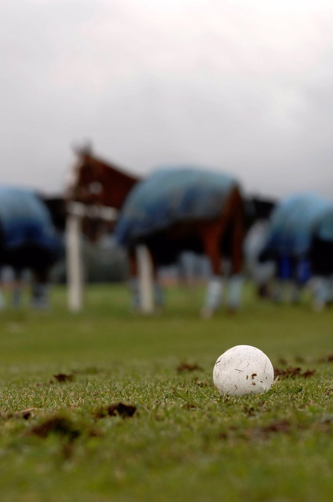 Stock Photo: 1848-656826 Polo ball lying on the grass, polo horses waiting for the match to begin, Bucherer Trophy 2010, polo tournament, Thann, Holzkirchen, Upper Bavaria, Bavaria, Germany, Europe