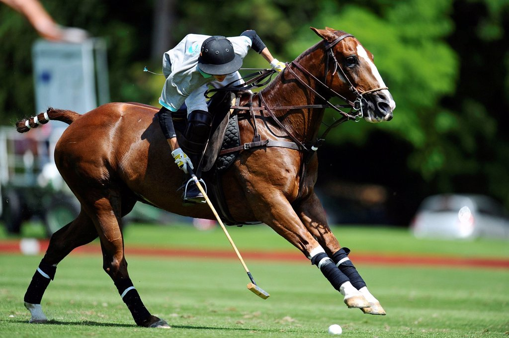A polo player is bending dow to the ball to hit it : Stock Photo