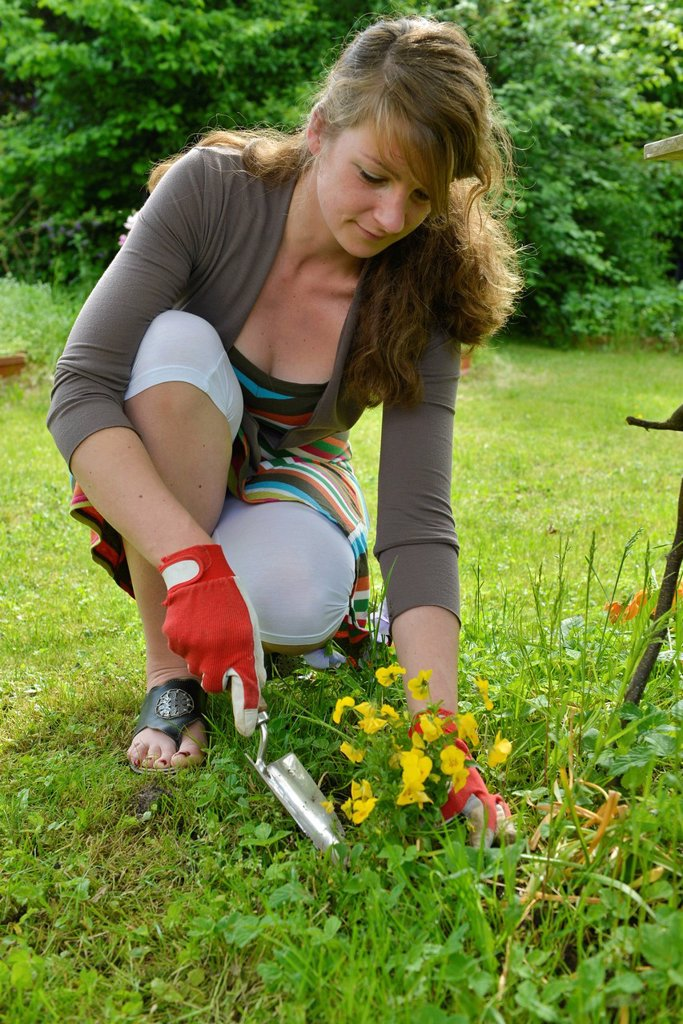 Woman planting pansies in the garden : Stock Photo