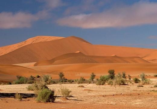 Dune landscape, Sossusvlei, Namib Desert, Namibia, Africa : Stock Photo