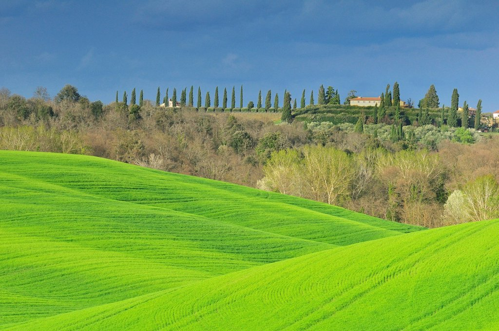 Fields and cypress trees, Crete Senesi area, Tuscany, Italy, Europe : Stock Photo