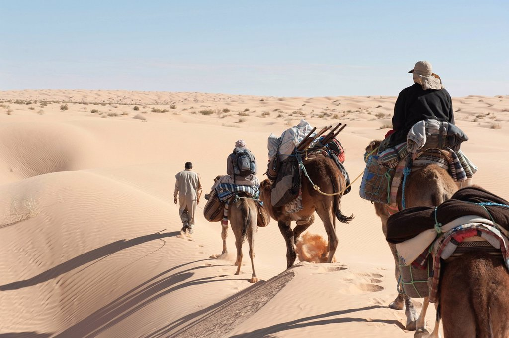 Stock Photo: 1848-660881 Sustainable tourism, camel trekking, camels, dromedaries Camelus dromedarius, sand dunes, Sahara desert between Douz and Ksar Ghilane, Southern Tunisia, Tunisia, Maghreb, North Africa, Africa