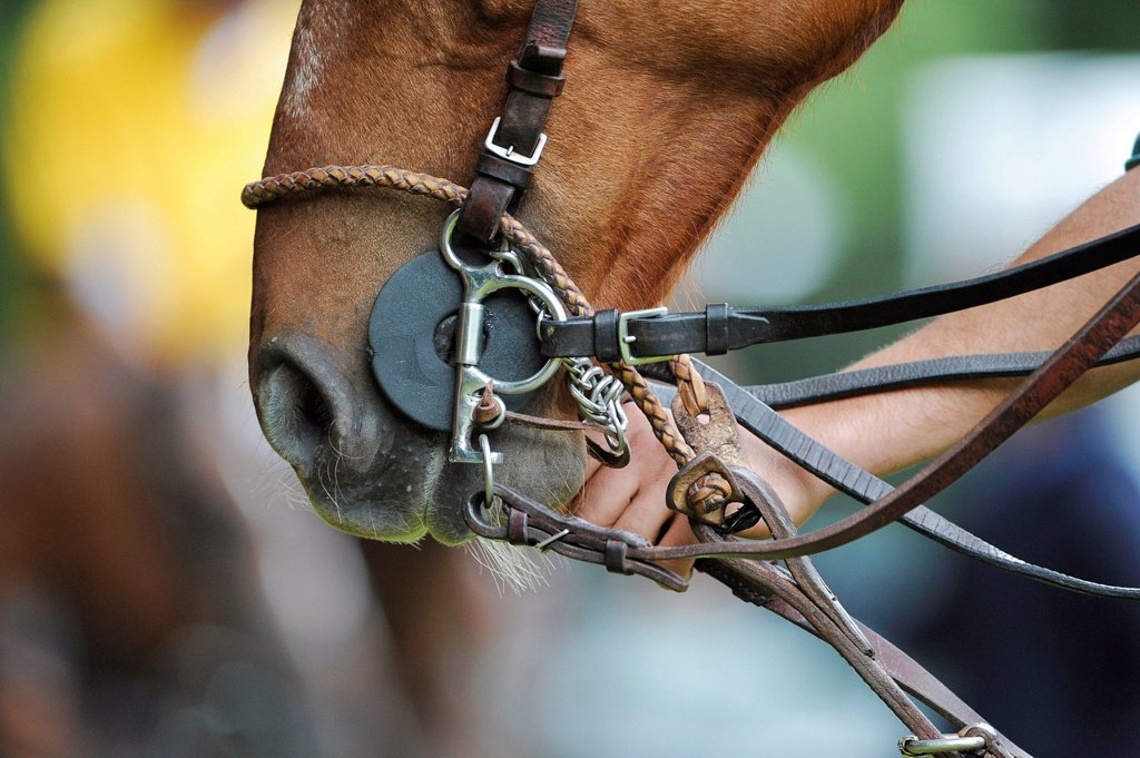 One hand holding the bridle of a polo pony : Stock Photo