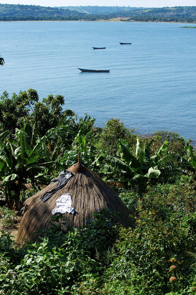 Stock Photo: 1848-662664 Musila Island, Lake Victoria, Bukoba, Tanzania, Africa