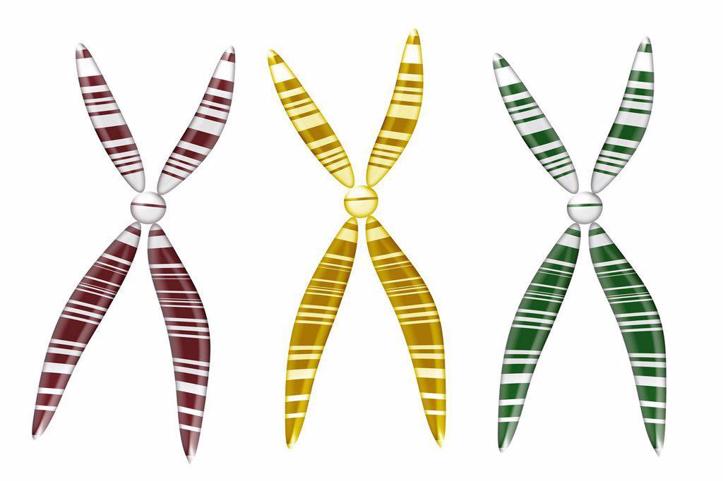 Chromosomes, illustration : Stock Photo