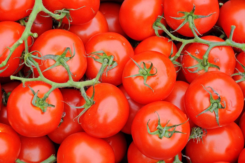Stock Photo: 1848-664141 Tomatoes