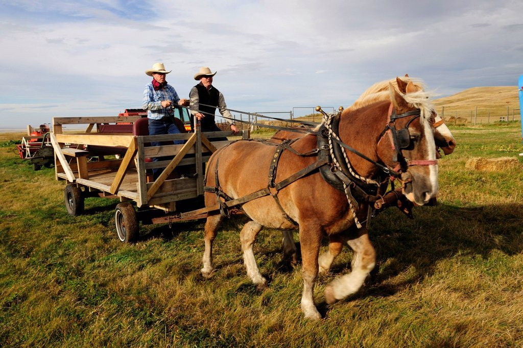 Stock Photo: 1848-664455 Two cowboys steering a horse cart, Saskatchewan, Canada, North America