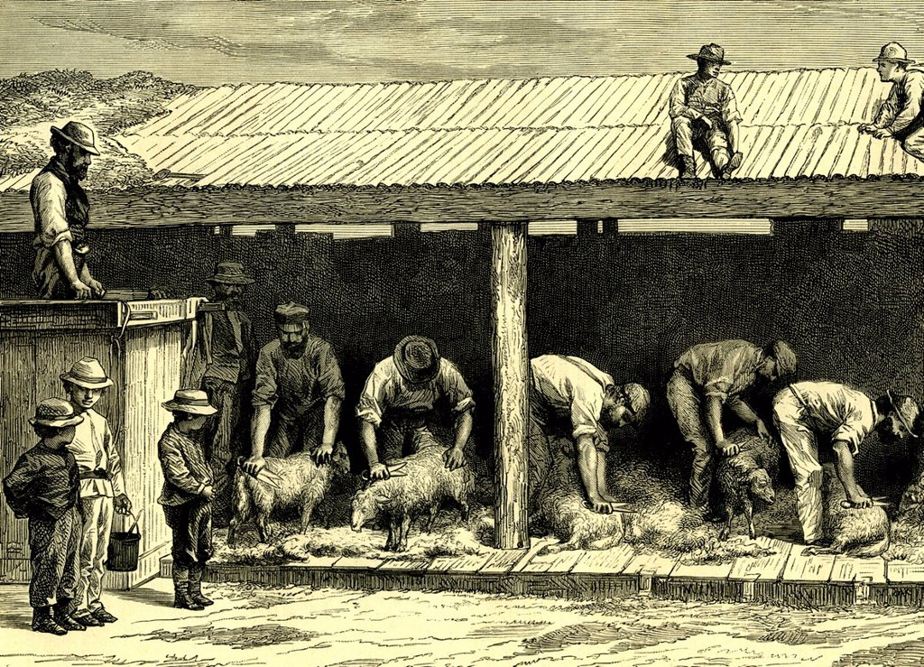 Stock Photo: 1848-665295 Sheepshearing, Australia, historical illustration, 1899