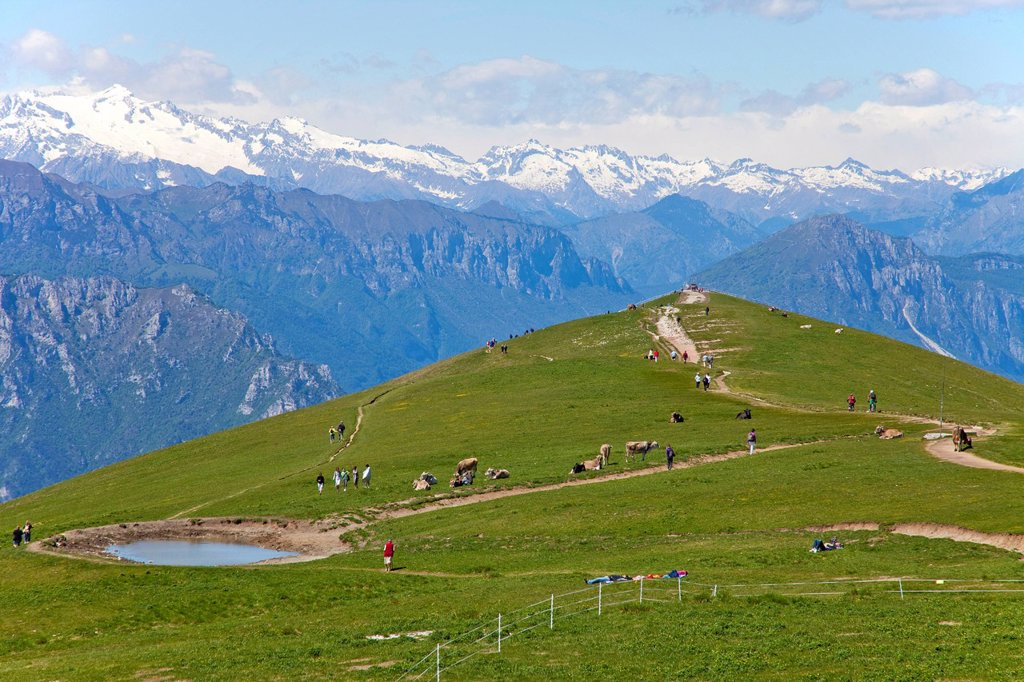 Stock Photo: 1848-666112 Hike along the ridge of Mount Baldo to the viewpoint Colma di Malcesine, cows on pasture, Monte Baldo massif, Lake Garda, Malcesine, Verona province, Veneto, Italy, Europe
