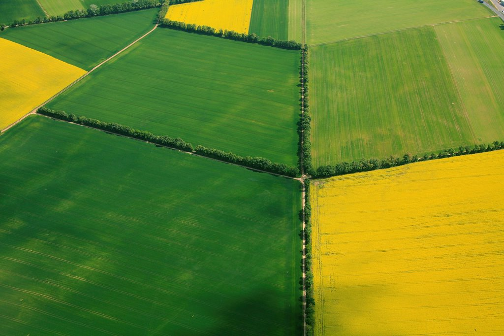 Stock Photo: 1848-666526 Aerial view, grain fields and canola fields separated by hedgerows, Erbes_Buedesheim, Rhineland_Palatinate, Germany, Europe
