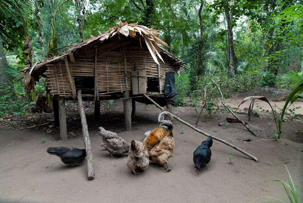 Stock Photo: 1848-668423 Cabin of forest dwellers, in Ponmudi, Western Ghats, Kerala, South India, India, Asia