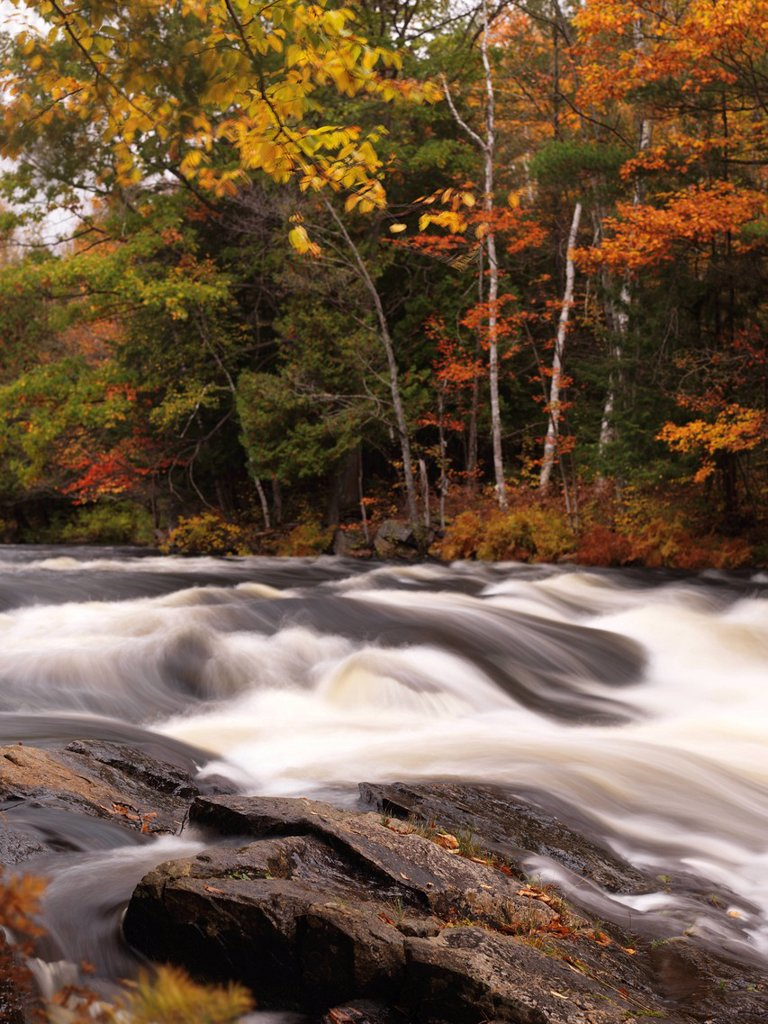 Oxtongue river rapids, autumn, Algonquin, Ontario, Canada, North America : Stock Photo