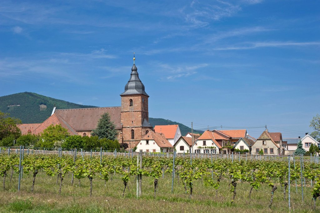 Parish Church of the Visitation, Burrweiler, German Wine Route or Southern Wine Route, Palatinate, Rhineland_Palatinate, Germany, Europe : Stock Photo