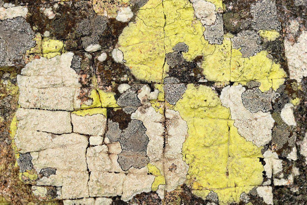 Stock Photo: 1848-674775 Several lichen on granite rock, Magnetic Island, Queensland, Australia