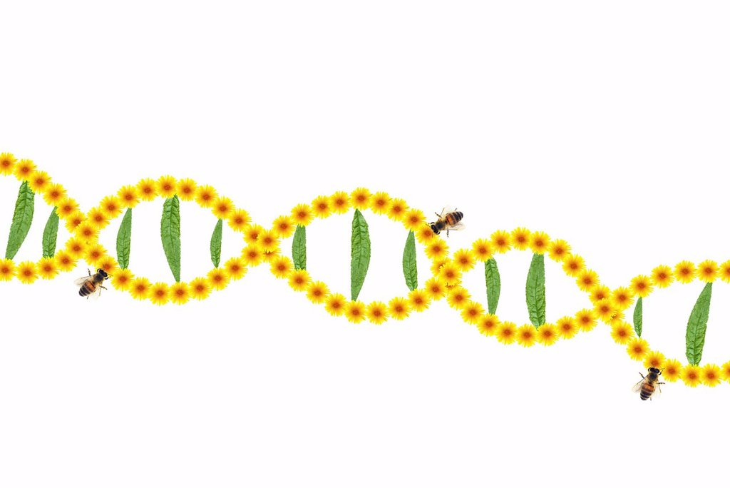 DNA strands from dandelions with bees and leaf bars : Stock Photo