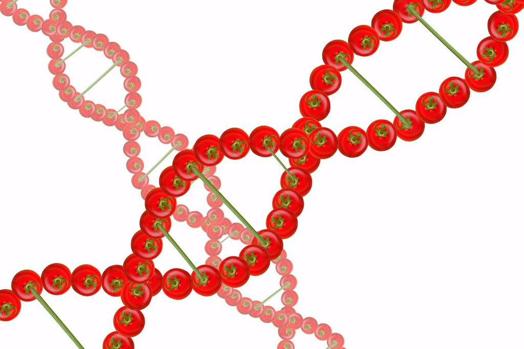 Stock Photo: 1848-675932 DNA strands from tomatoes
