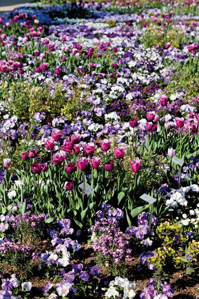 Flower bed, Federal Horticulture Show BUGA 2011, Koblenz, Rhineland_Palatinate, Germany, Europe : Stock Photo