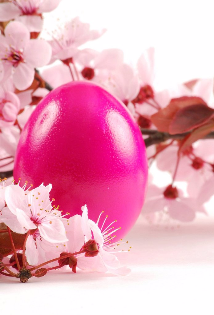 Easter egg with blossoms of the Cherry plum Prunus cerasifera Nigra : Stock Photo