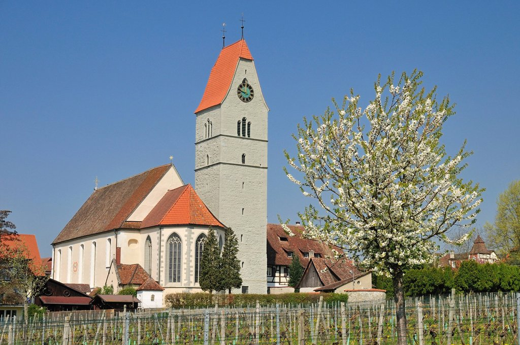Stock Photo: 1848-686853 St. John the Baptist, catholic church, Hagnau on Lake Constance, Baden_Wuerttemberg, Germany, Europe