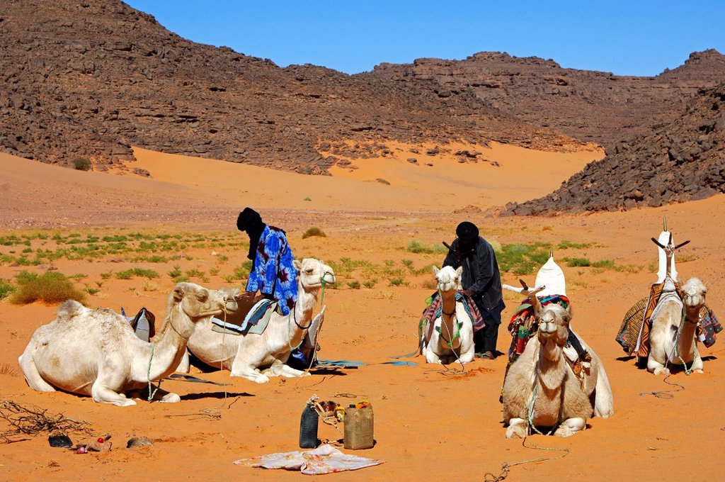 Stock Photo: 1848-687163 Tuareg camp with dromedaries, Sahara, Libya, North Africa, Africa
