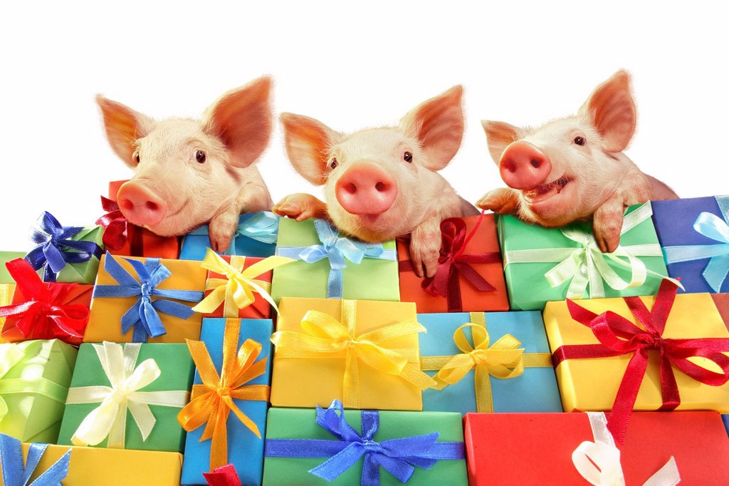 Three piglets lying on a mountain of gifts : Stock Photo
