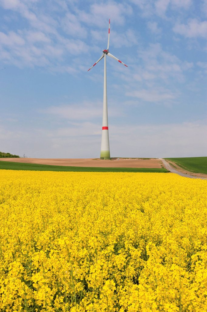 Stock Photo: 1848-688037 Wind turbine, wind energy plant, with a canola field, Hesse, Germany, Europe