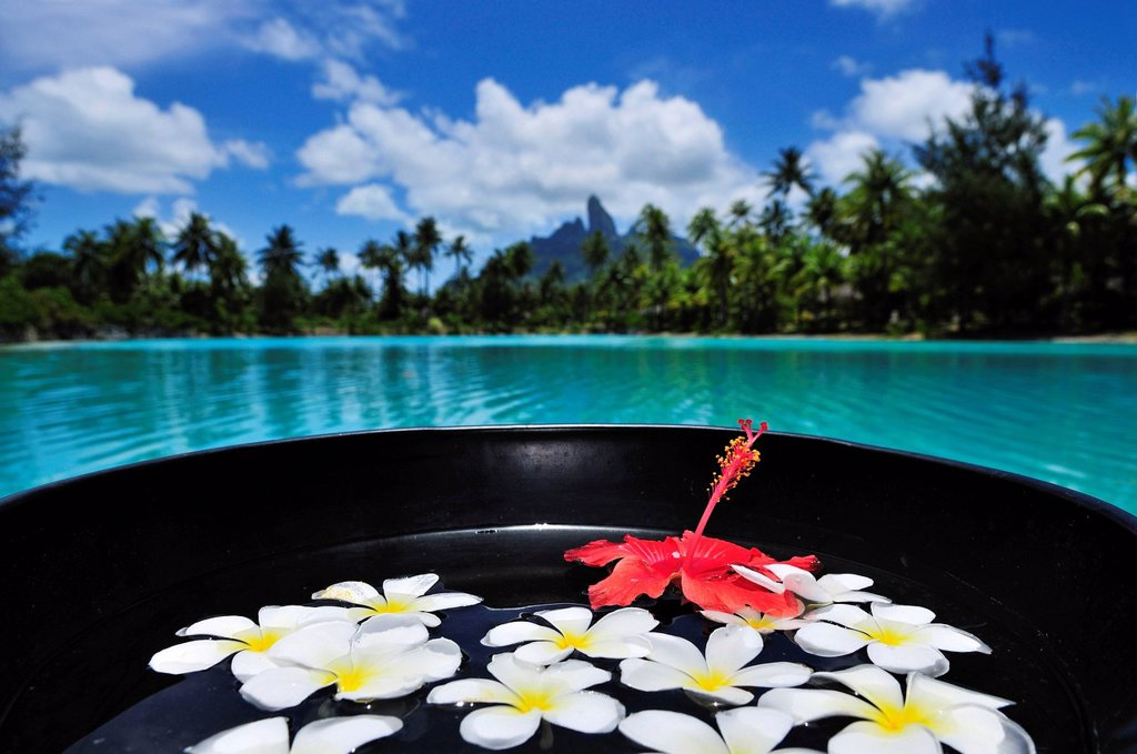 Floral decorations, St. Regis Bora Bora Resort, Bora Bora, Leeward Islands, Society Islands, French Polynesia, Pacific Ocean : Stock Photo